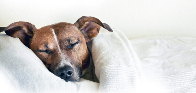 ¿Tus mascotas sueñan?